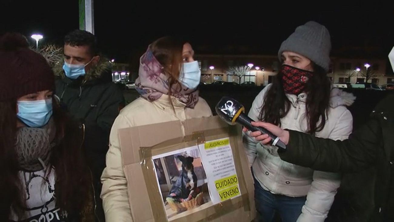 Más de 20 perros envenenados en San Martín de la Vega