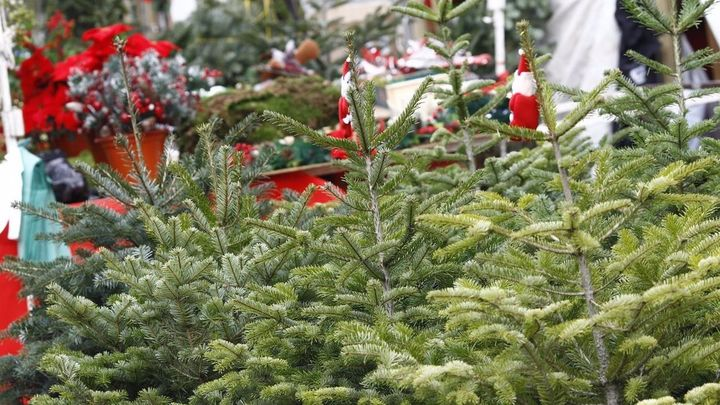 El Ayuntamiento de Madrid habilita desde este jueves viveros para recoger abetos de Navidad