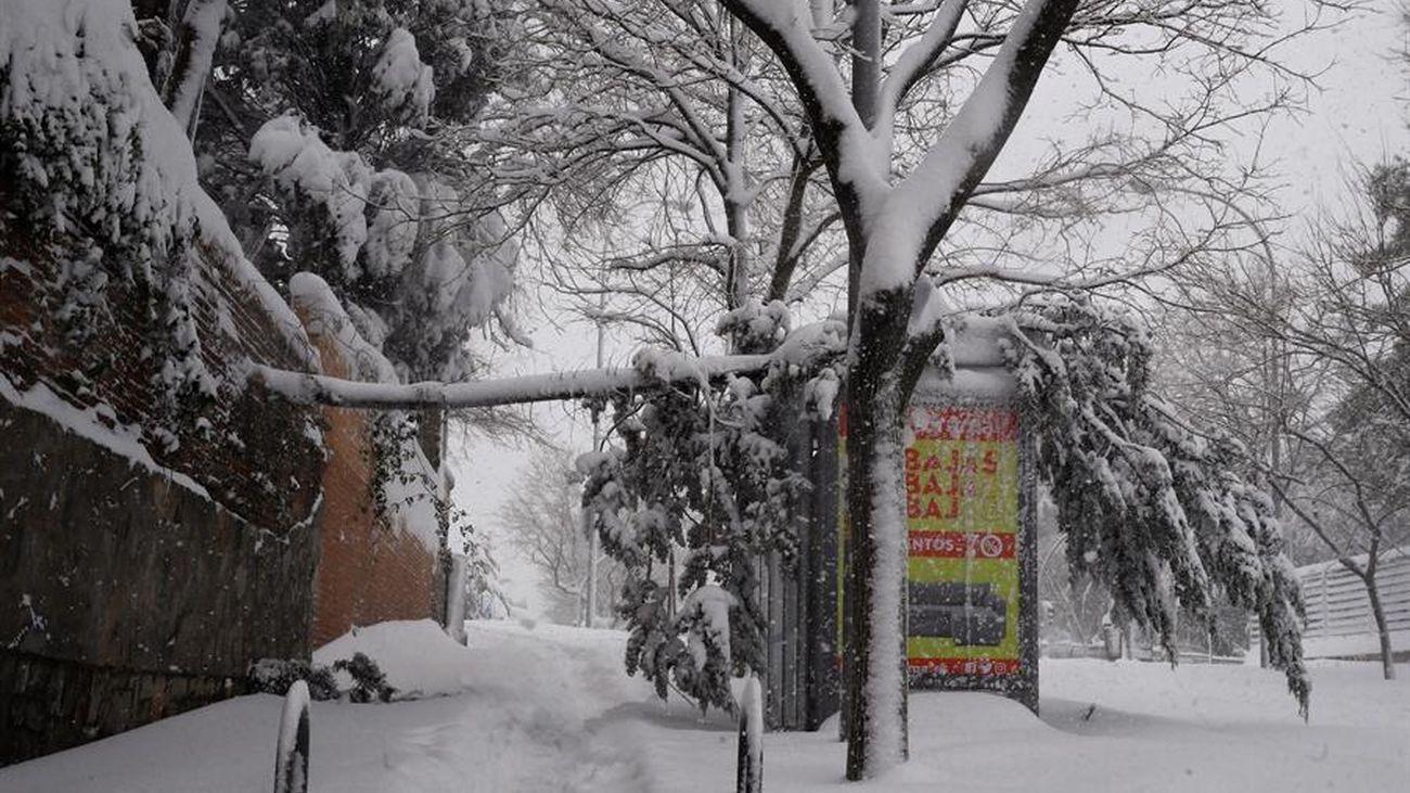 Un árbol caído en Madrid por la nevada Filomena