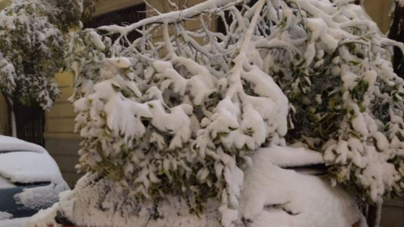 Un árbol caído sobre un coche en Madrid centro