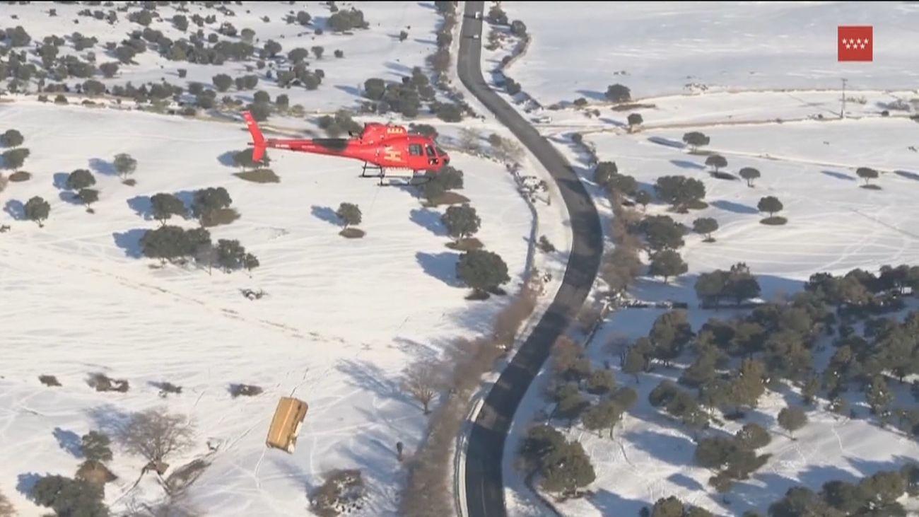 Alimentan con un helicóptero del GERA a 400 animales aislados por la nieve en Colmenar Viejo
