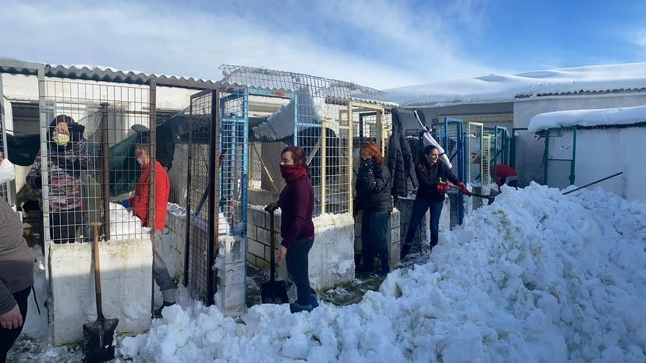 Voluntarios del albergue de animales 'La Madrileña' intentando recuperar las instalaciones