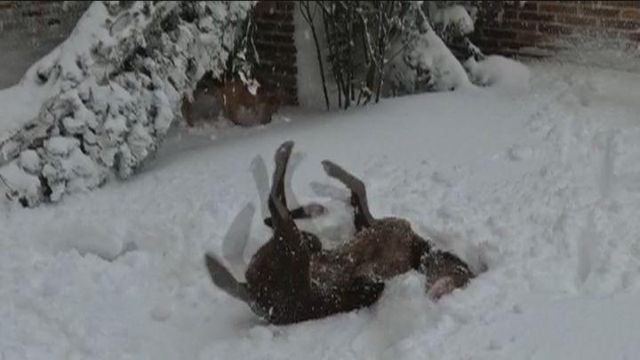 Así afecta el frío polar a las mascotas