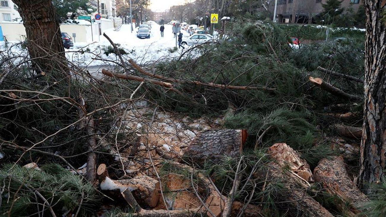 Árboles caídos por la nevada Filomena en Madrid capital