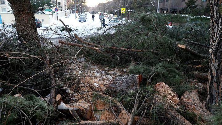 Las consecuencias catastróficas de Filomena en los árboles de Madrid