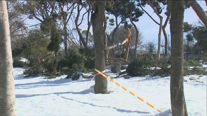 Cientos de miles de árboles de Madrid deberán ser saneados y recuperados tras la nevada