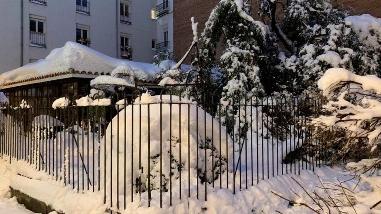 Asi ha quedado la floristería 'El Angel del Jardín' después de la gran nevada en Madrid