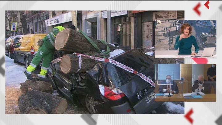 Cortan un árbol de grandes dimensiones que ha destrozado un vehículo tras sepultarlo