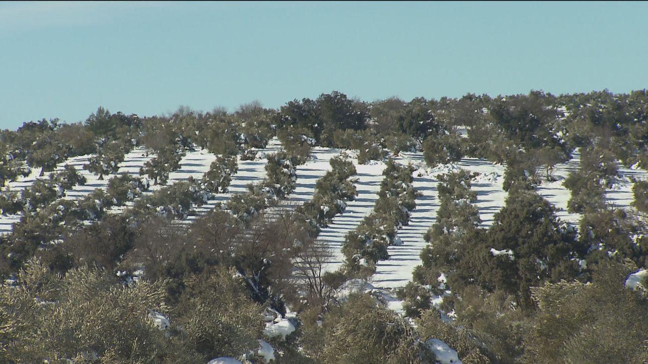 La gran nevada deja al sector agrícola de Madrid con pérdidas millonarias