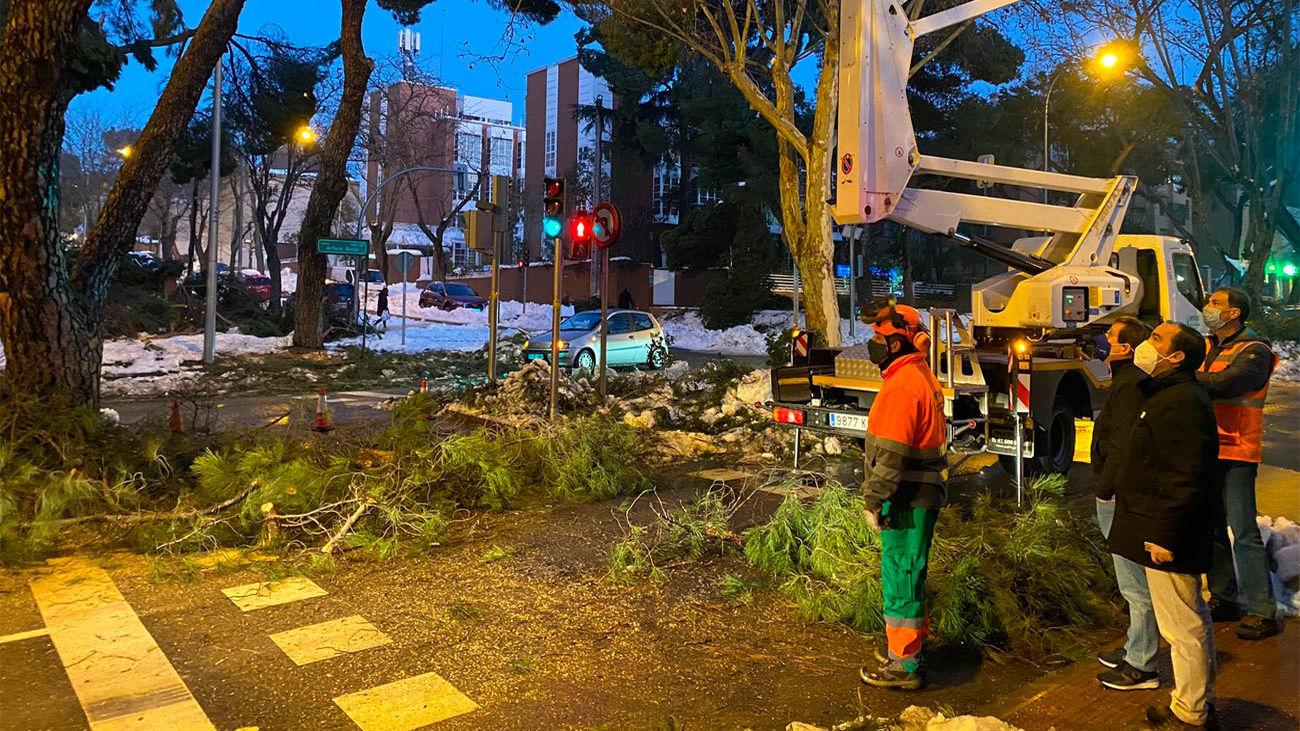 Estado en que se encuentra el arbolado de la calle Arturo Soria