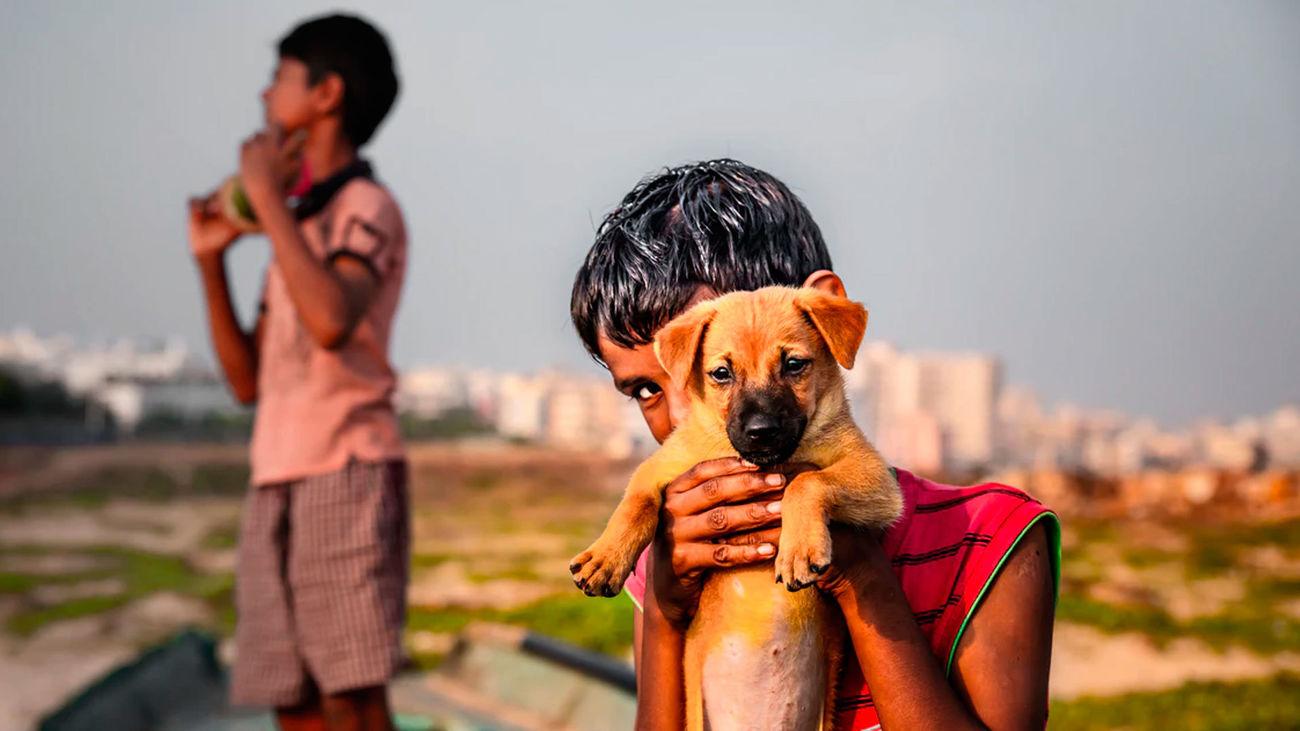 Un niño sostiene un cachorro de perro