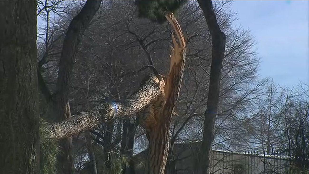 Comienzan los trabajos de poda y evaluación de daños forestales en los parques madrileños