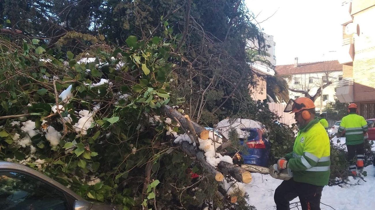 Operarios retirando ramas en Las Rozas