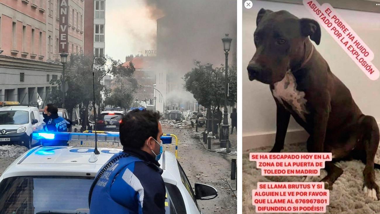 Imagen de Brutus, el perro desaparecido tras la enorme explosión de la calle Toledo en el centro de Madrid