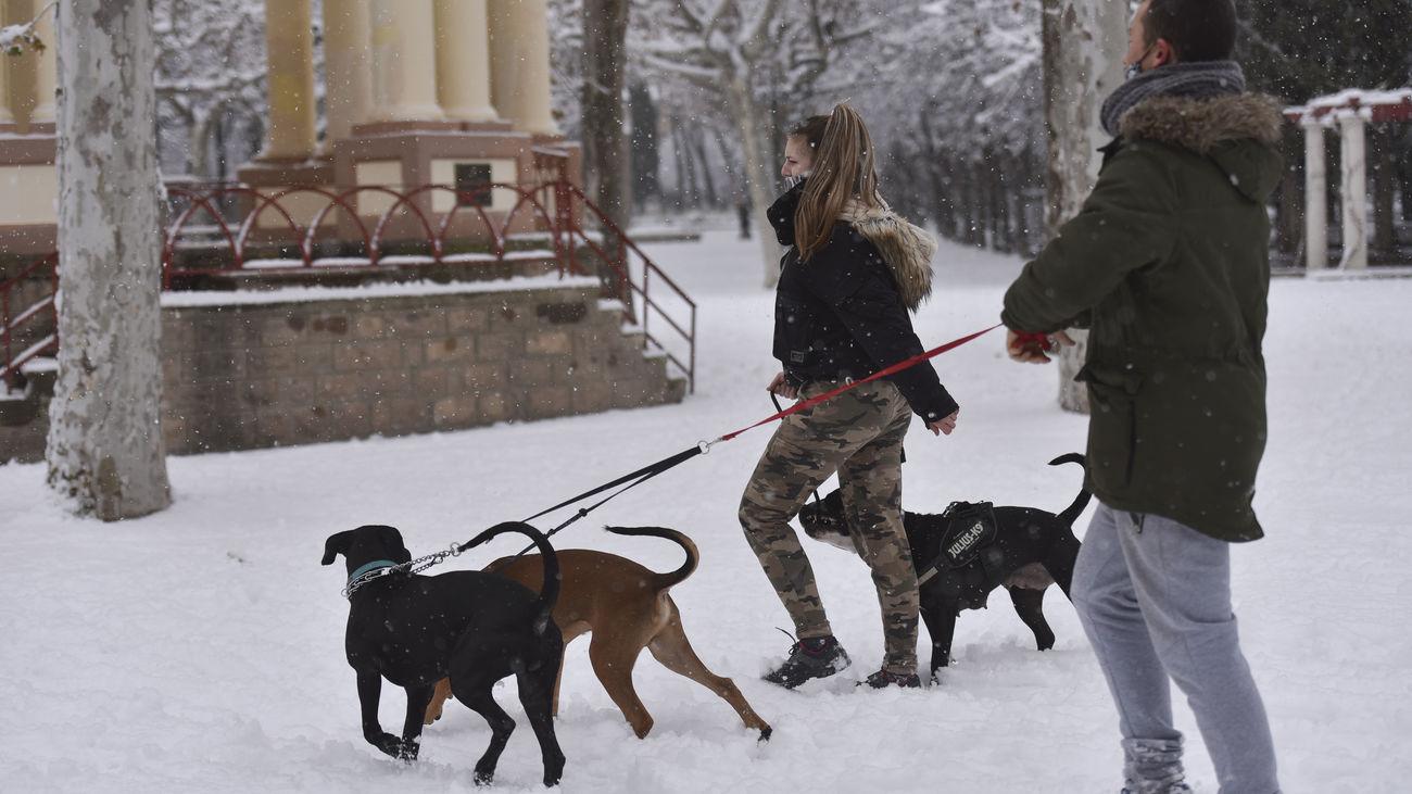 Una pareja paseando a sus perros