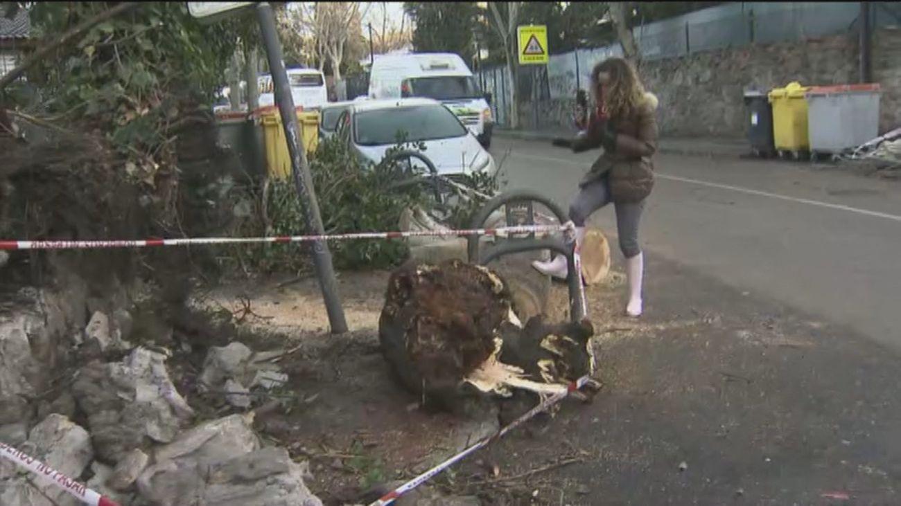 El viento genera problemas en Madrid con árboles caídos en las aceras y tejados y muros derrumbados