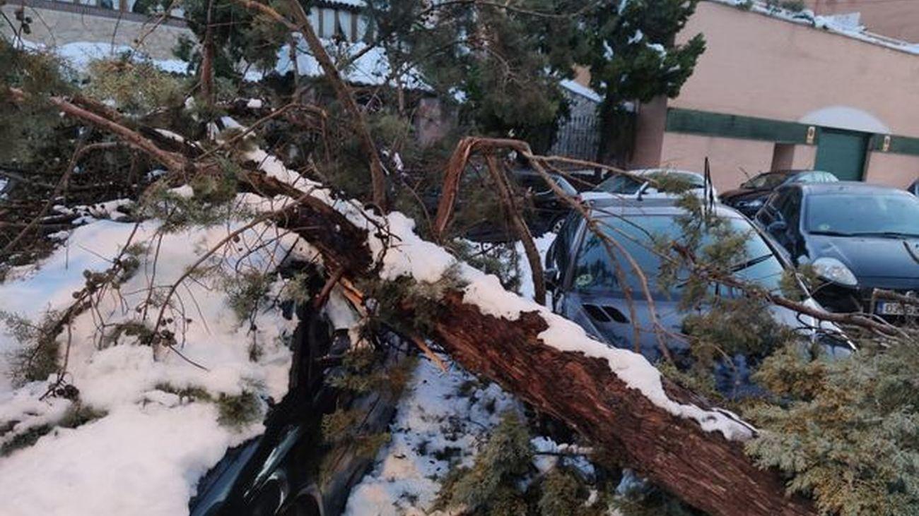 Árbol caído sobre varios vehículos en una calle de Valdemoro