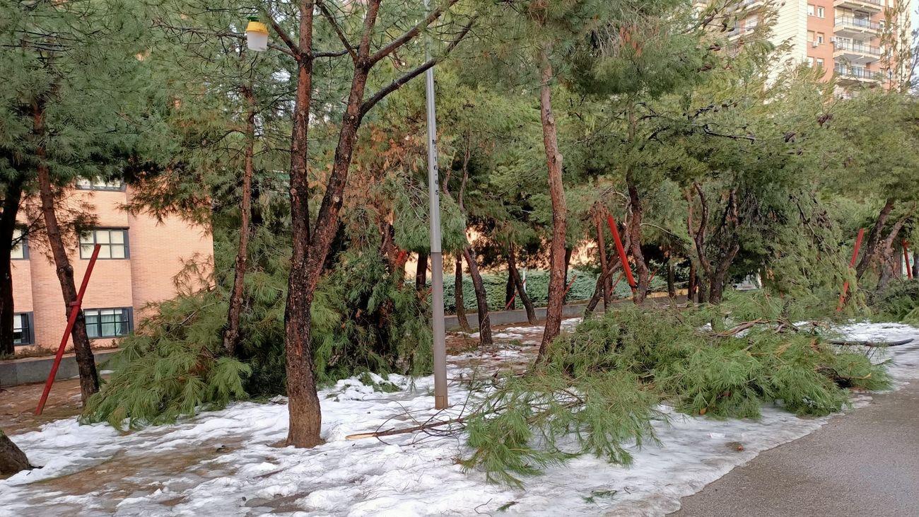 Árboles caídos en Madrid tras la nevada
