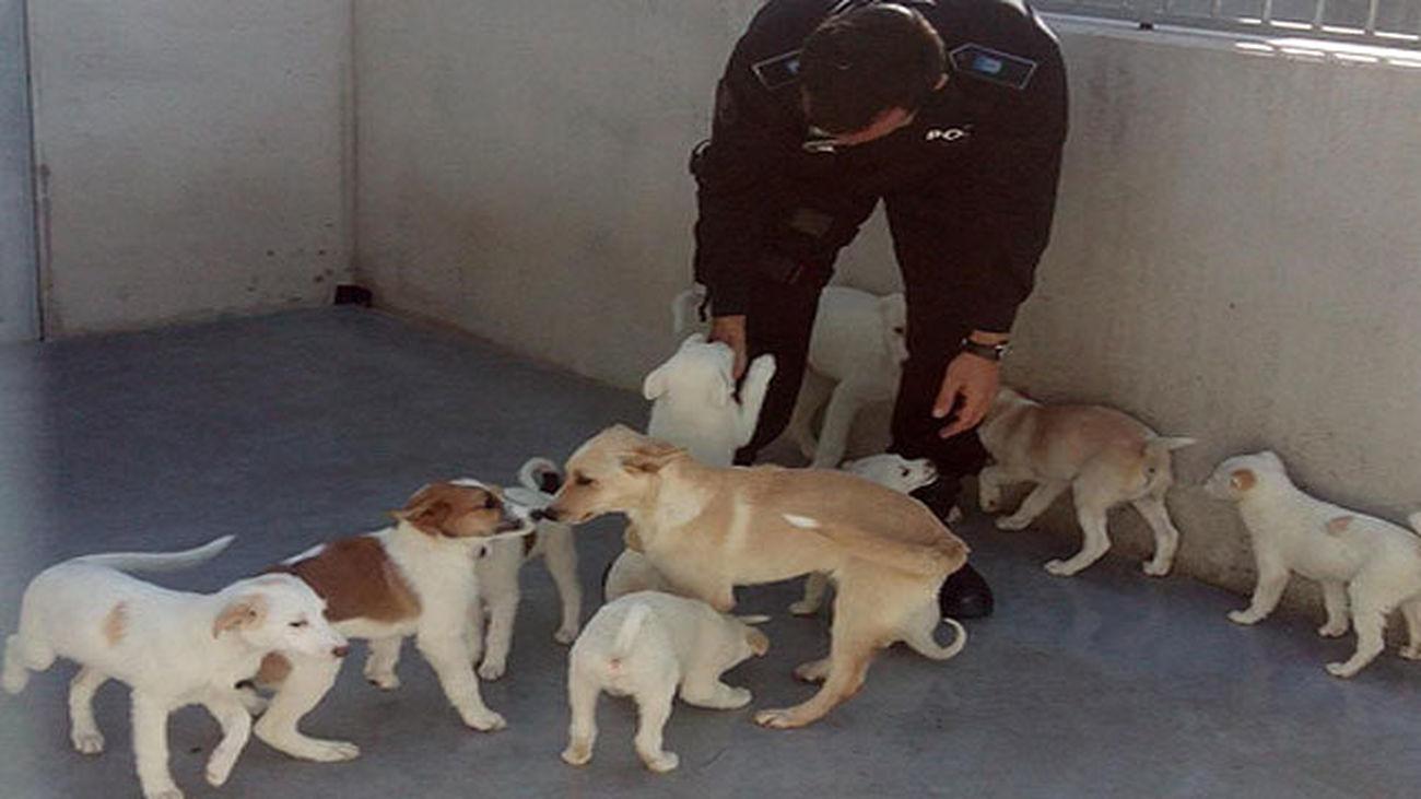 Grupo de cachorros en torno a su cuidador