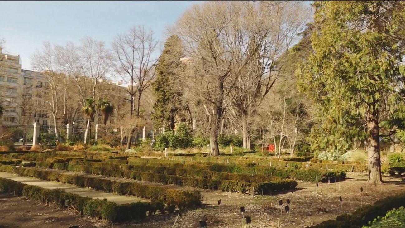 El Real Jardín Botánico reabre sus puertas este jueves