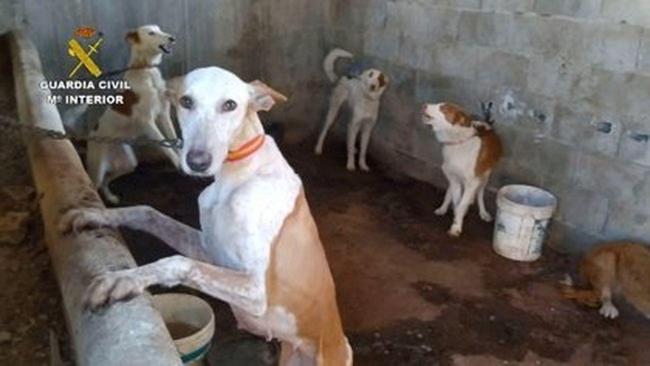 """Rescatados 32 perros """"en condiciones deplorables"""" robados por una red que iba a venderlos para la caza"""