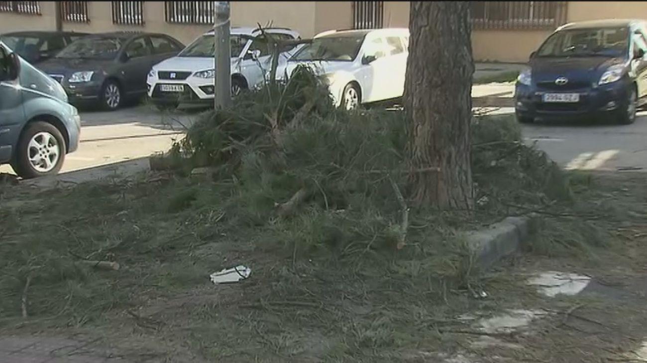 Las calles del barrio de Simancas siguen llenas de las ramas de árboles tronchados, tres semanas después de Filomena