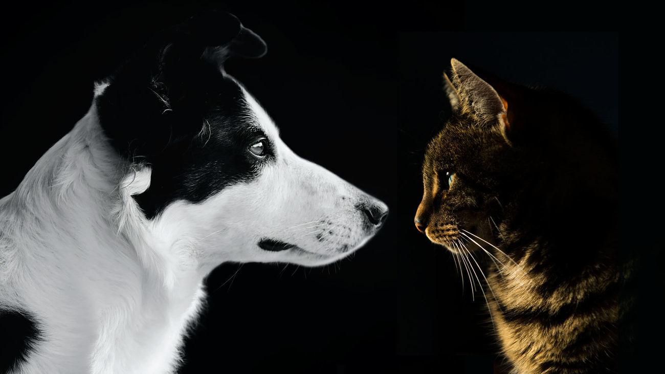 Accesorios para mascotas a precio de chollo en Leganés