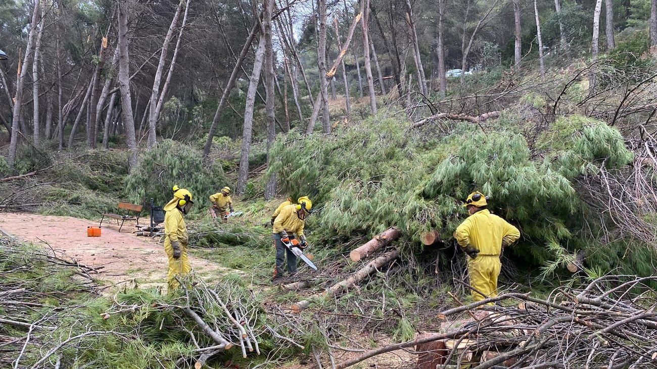 Operarios abren camino tras la caída de árboles
