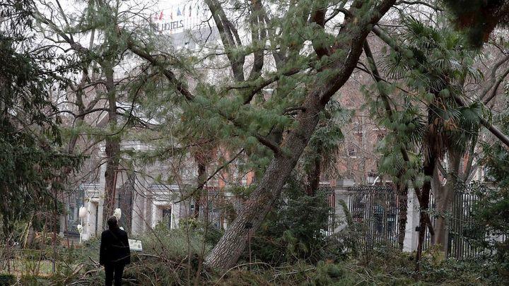 Reabre el Jardín Botánico tras perder el 2% de los árboles por la borrasca Filomena