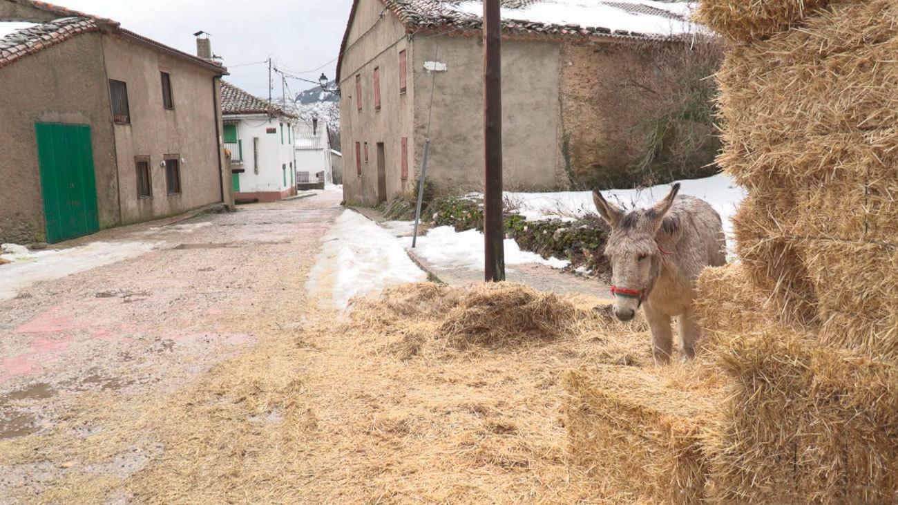 El ejemplo de El Cardoso de la Sierra para luchar contra el duro invierno