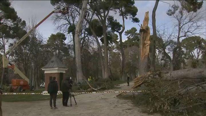 El Retiro llora la pérdida de mil árboles, pero resiste con sus ejemplares históricos