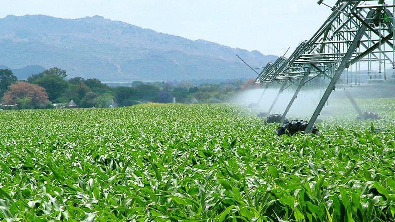 La agricultura amenaza a 24.000 de las 28.000 especies en riesgo de extinción