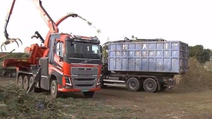 Boadilla tritura los árboles caídos por el temporal para convertirlos en biomasa