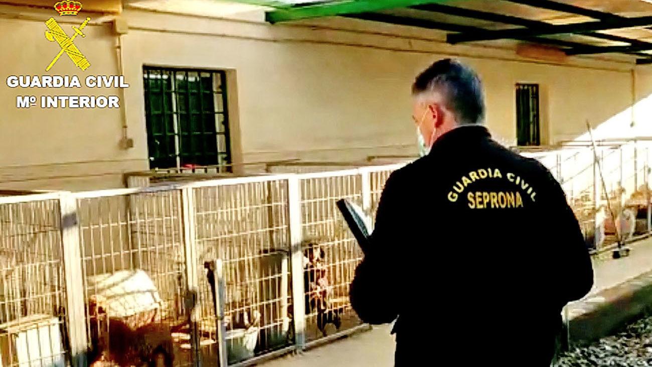 El Seprona rescata cerca de 500 perros de distintas razas