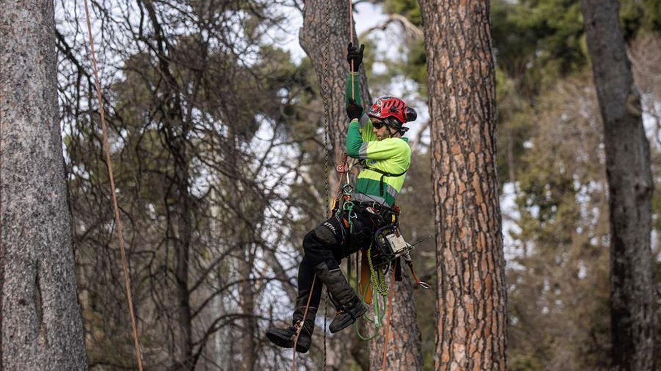 Revisión de los árboles del Retiro