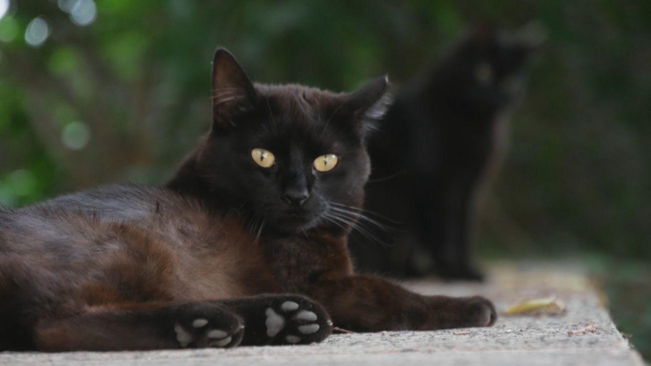 ¿Por qué a los madrileños se les llama 'gatos'?