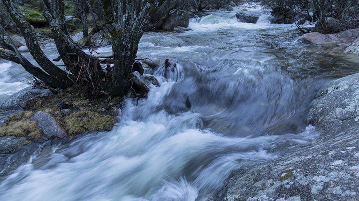 Biomaratón en el norte de Madrid para crear un registro local medioambiental