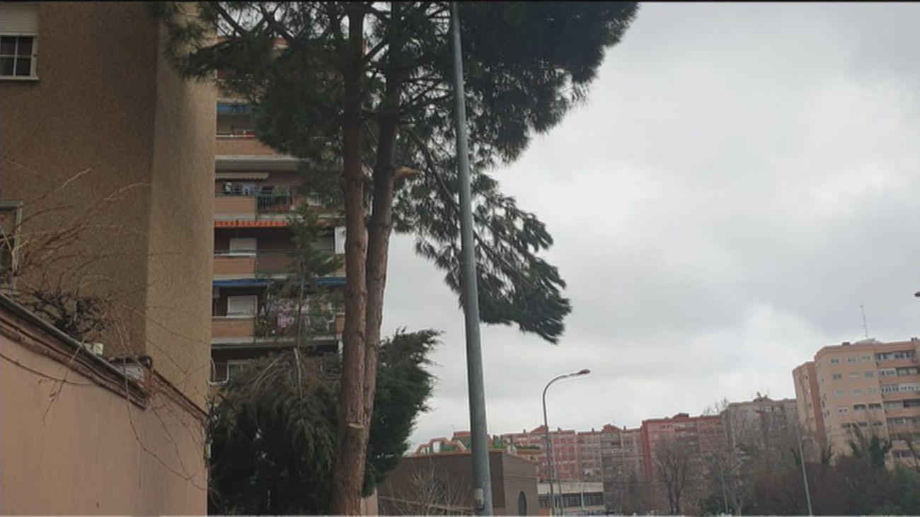 Un vecino de Fuenlabrada denuncia el peligro de una rama de un árbol situado cerca de un colegio