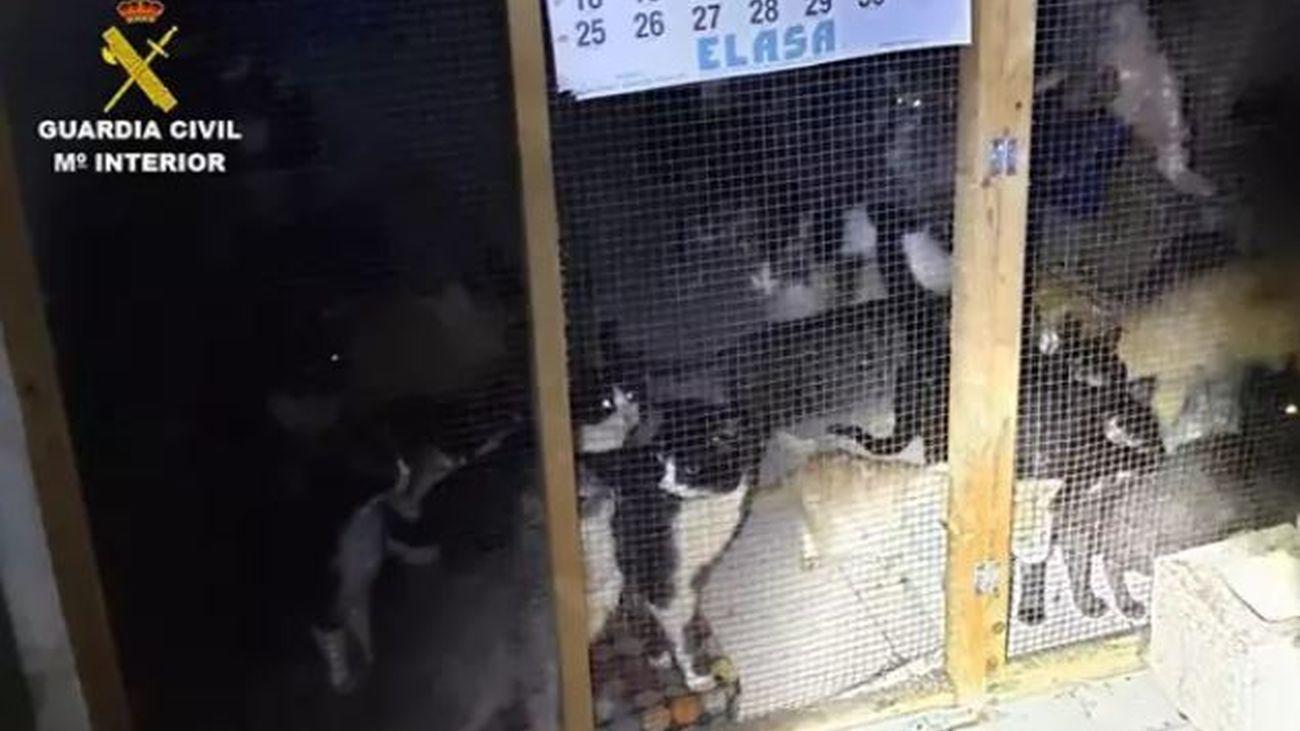 Gatos rescatados en Arganda del rey