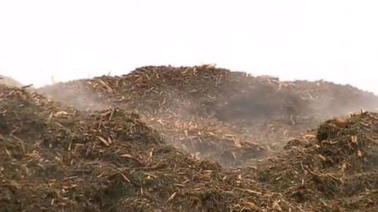 Las plantas de compostaje de Madrid, a tope para procesar los estragos de Filomena