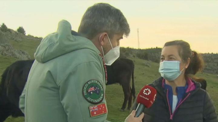 Los ganaderos madrileños denuncian 5.000 ataques de lobos y dicen que les perjudica la prohibición de cazarlos