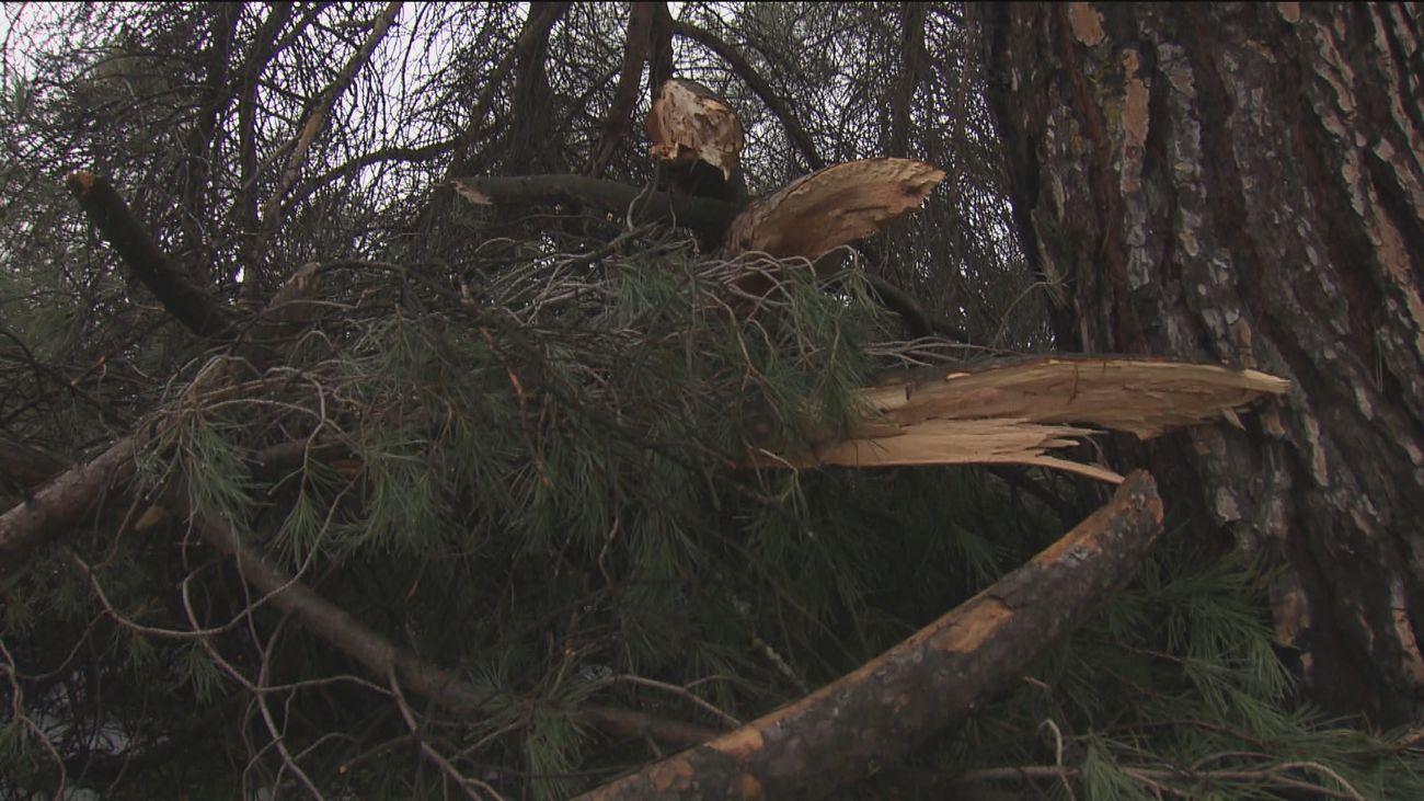 Árboles y ramas caídas tras el paso de la borrasca Filomena por Madrid