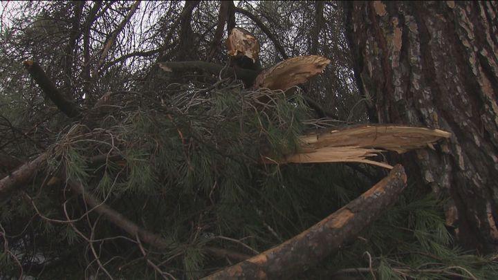 Reabre el parque de la Paz de Fuenlabrada tras la inspección de daños por 'Filomena'