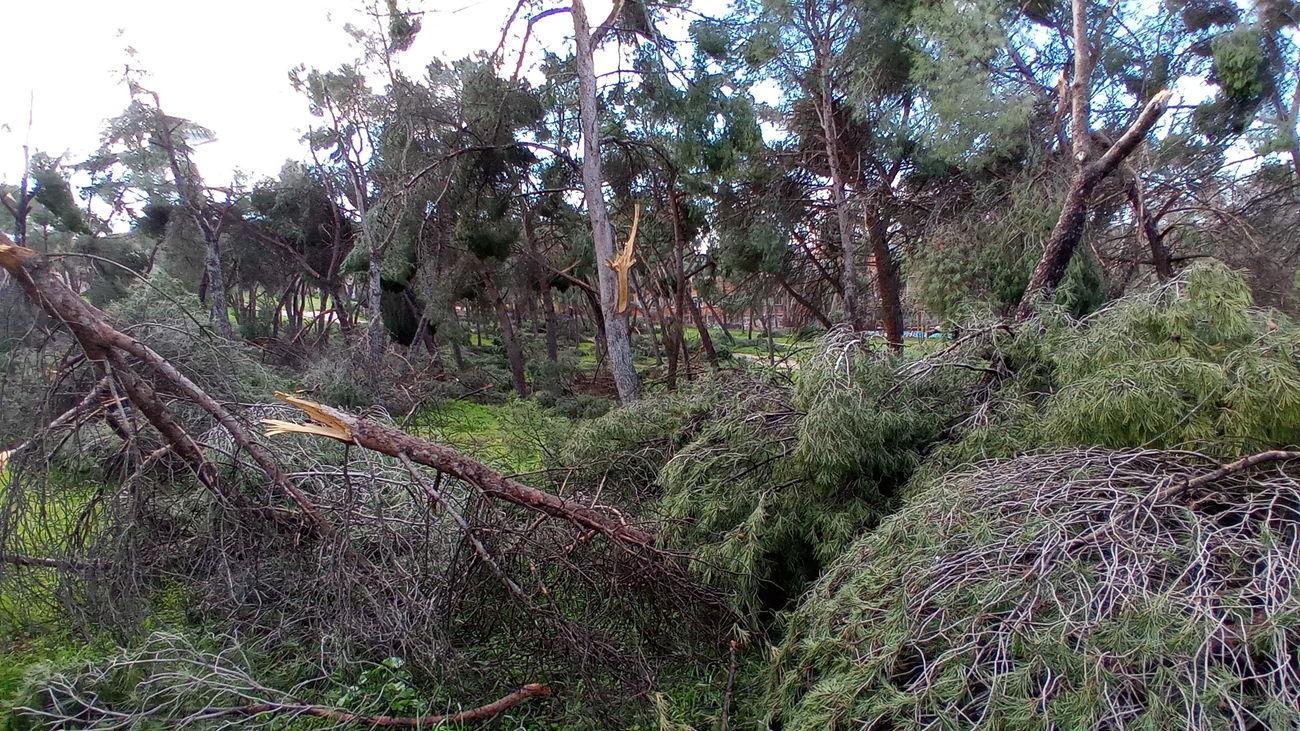 Arboles caídos en un parque tras el paso de la borrasca Filomena