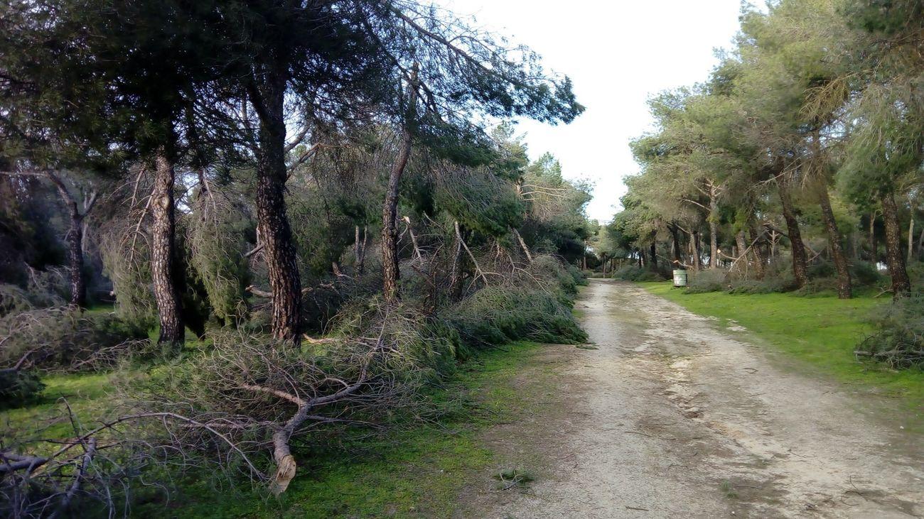 Parque de Las Presillas de Alcorcón