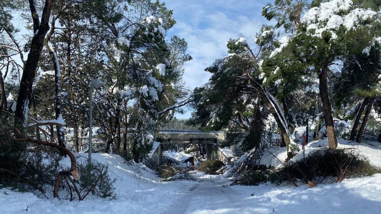 Daños en el arbolado causados por el temporal de nieve Filomena