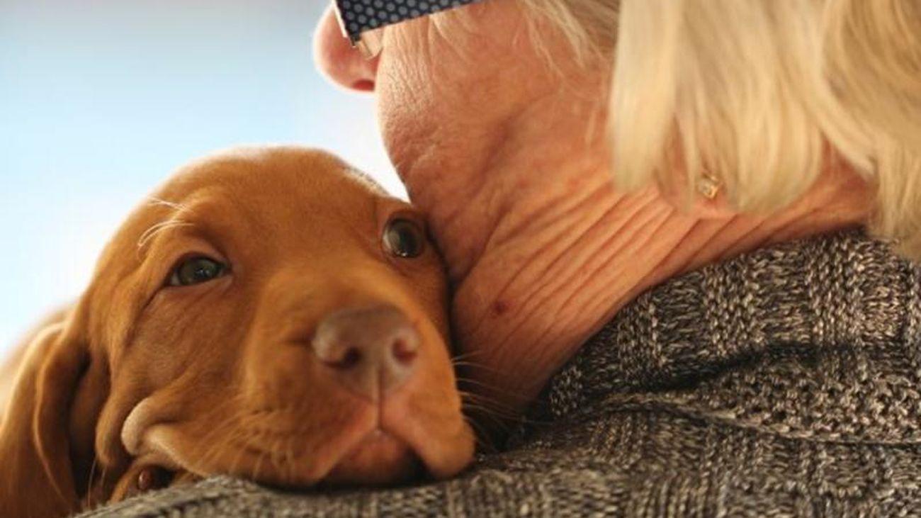 Las mascotas ayudan a reducir el aumento de un 22% del estrés por la pandemia