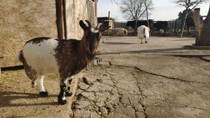 Así es el Santuario Vegan, un refugio que da una segunda oportunidad a los animales de granja maltratados