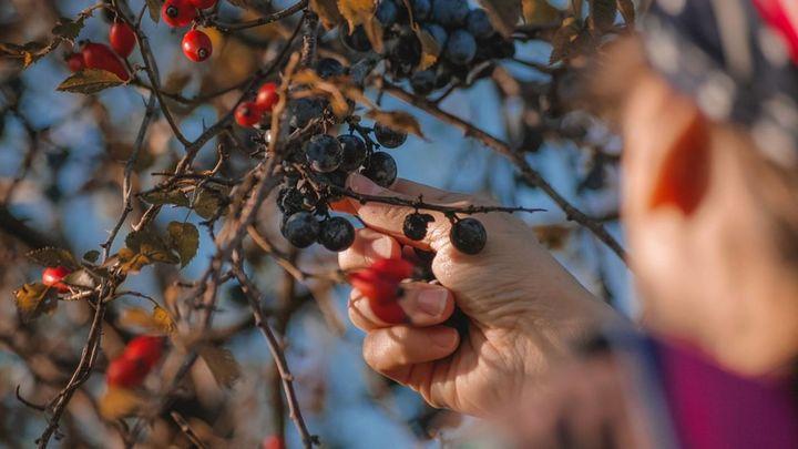Alquila un huerto y cultiva tus propias verduras y hortalizas para ahorrar
