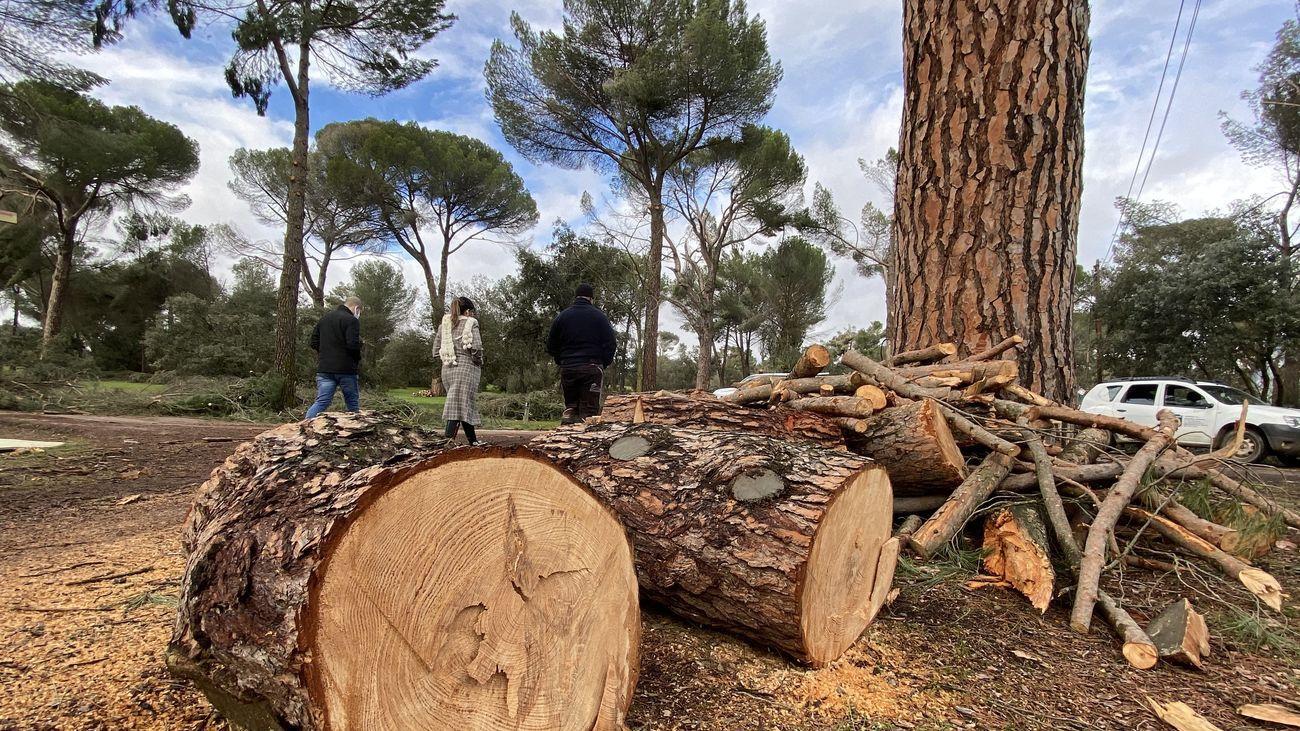 Ramas y troncos retirados en el Monte del Pilar de Majadahonda
